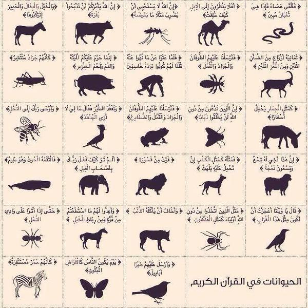 الحيوانات التي ذكرت في القرآن - اكتب صح