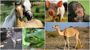 الحيوانات في القرآن الكريم - اكتب صح