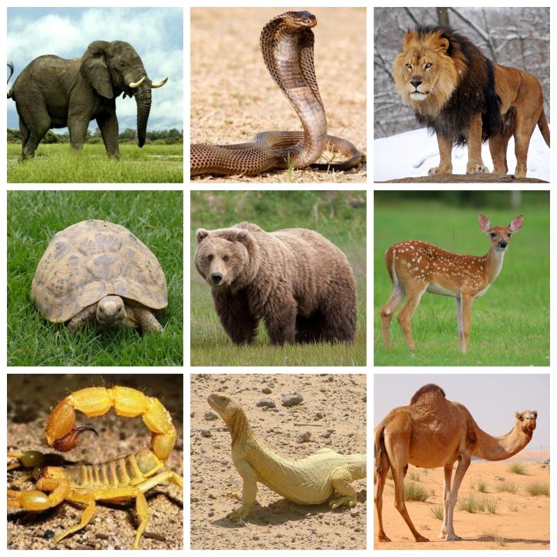 من الشيصبان للعيثوم.. اعرف أسماء ذكور الحيوانات وإناثها